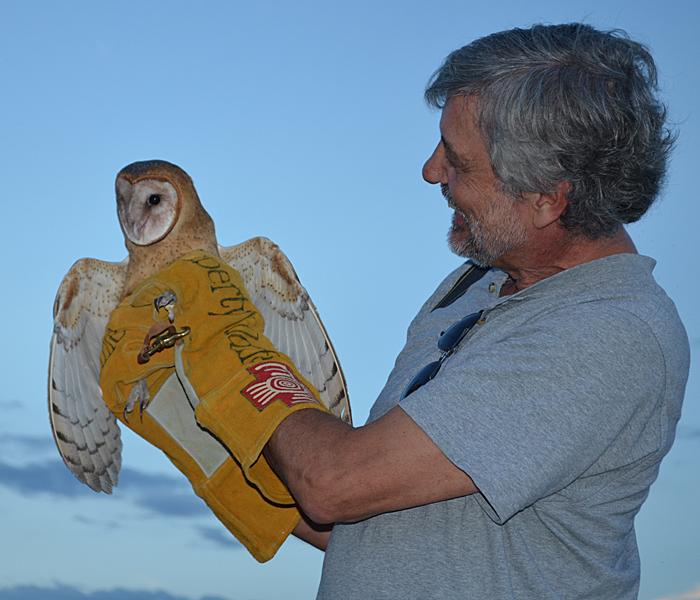 Barn Owl release