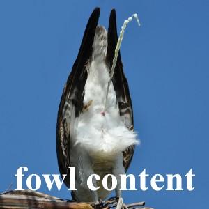 bird jokes