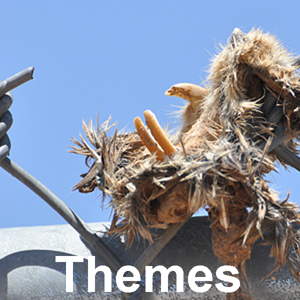 Bird Themes