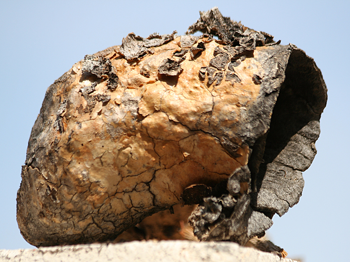 Saguaro Boot