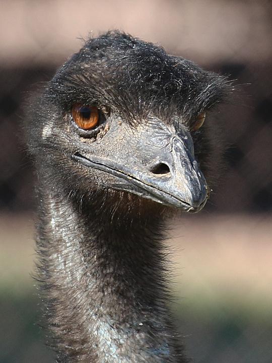 Emu EMUU